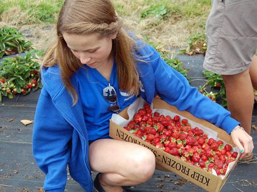 strawberries-girl